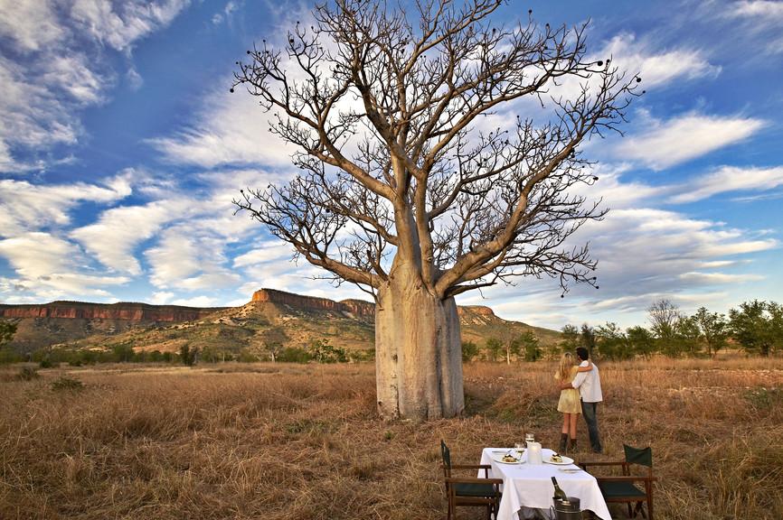 Boab-Dining, The Kimberley, WA