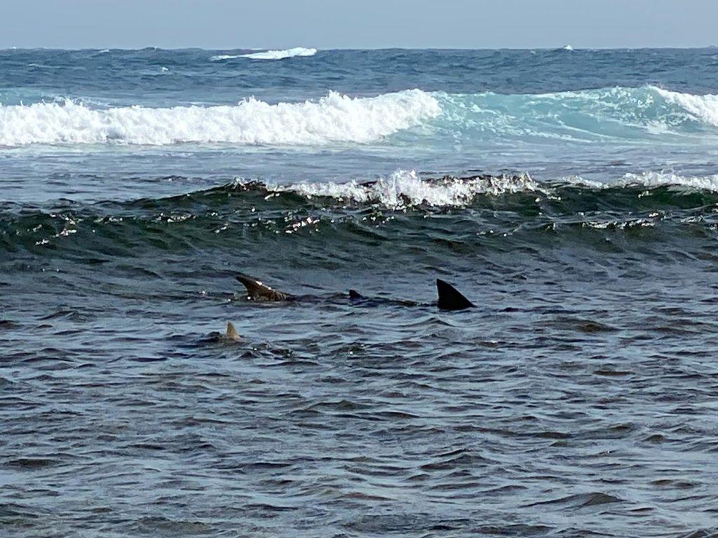Shark Bay - Capo Verde - Alida Travel